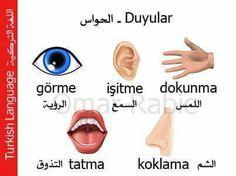الحواس في اللغة التركيه The senses in Turkish