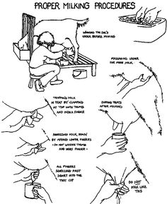 Proper hand milking procedures by Rosalie Sinn (for Heifer Project International) and Jennifer Stultz from the July/August, 2003 issue of Dairy Goat Journal.  #goatvet prefers to spray rather than dip teats