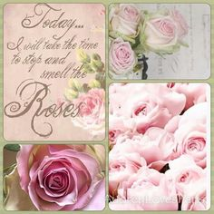 Pink Roses, mood/color collage