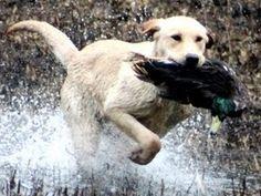 My Tex's litter mate Buck. Anyone like DUCK?