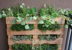balcony - herb garden