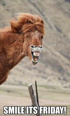 Animals Laughing Out Loud - Horses Funny - Funny Horse Meme - - another talking horse Mr. ED except maybe this horse has found something funny to laugh out loud //Manbo The post Animals Laughing Out Loud appeared first on Gag Dad. Smiling Animals, Happy Animals, Funny Animals, Cute Animals, Horse Smiling, Beautiful Horses, Animals Beautiful, Beautiful Cats, Beautiful Pictures
