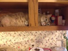 And then take a nap in my cabinet