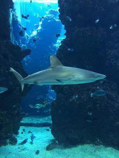 **Oceanographic Museum of Monaco - Monte-Carlo, Monaco