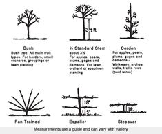 Fan Trained & Espalier Fruit Trees - Chris Bowers and Sons