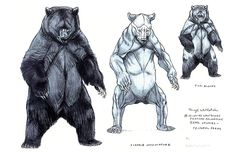 • drawing art black draw animal bear brown Anatomy Bears wild reference polar…