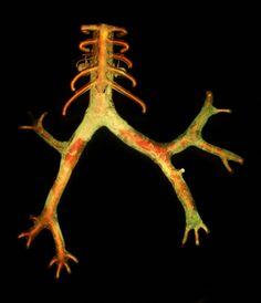 "Eric Franklin : Breathe   flameworked borosilicate glass, neon, wood, 40"" x 32"" x 9"", 2005"