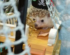Arrr, Captain Pricklepants, Pirate Princess