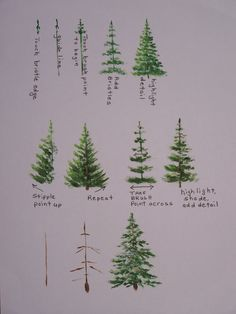 Watercolor Pine Tree Painting tutorial with step by step process photos Watercolour Tutorials, Watercolor Techniques, Painting Techniques, Watercolor Trees, Watercolor Paintings, Watercolors, Watercolor Christmas Tree, Painted Christmas Tree, Christmas Tree Drawing