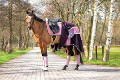 Bay Horse Pink Purple Black Dressage Tack Stallion Gelding Mare