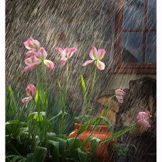 This picture by Vickie Howard has won the RHS Photographer of the Year 2010 competition. It also won the Garden Plants Study category Picture: Vickie Howard / RHS Photographer of the Yea