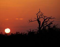 Kenyan Sunrise - 8x10 Fine Art Photograph Print - Africa, Kenya on Etsy by ShutterShark, $20.00