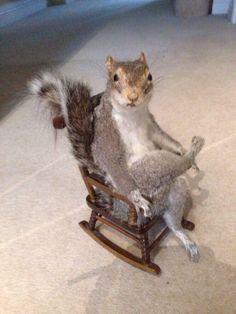 Squirrel taxidermy