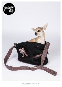 Are you ready to go♥? #goodmorning #getready #weekend #fashionchihuahua #giuliettalovers #style #glam