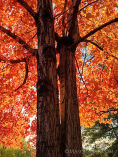 12 Fantastic Photos of Fall Trees Exploding with Color - My Modern Metropolis
