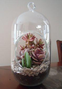 12 Succulent Terrarium-LG Capsule  Terrarium W/ by CTSairplants