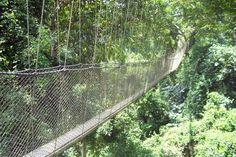 Cross walking on the canopys of trees off my bucket list :) Ghana, 2011