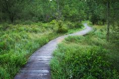 Fish and Game Garden Path Rees Roberts/Gardenista Natural Architecture, Landscape Architecture, Garden Paths, Garden Landscaping, Farm Pond, Wooden Walkways, Forest Path, Wooden Garden, Garden Seeds