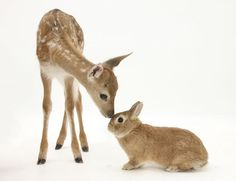 bambi and his friend, bunny :D
