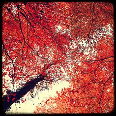 8x8 Fine Art Photography Lustre Print    French Mood for this autumnal picture...    TITLE : Red Dream France  SIZE : 8x8 (20x20 cm)
