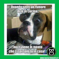 #bastardidentro #rumore #cane #ipnoticamentebastardidentro www.bastardidentro.it