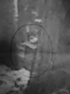 Black Eyed Child of Cannock Chase: Psychic reveals photos of girl ghost Scary Ghost Pictures, Real Ghost Pictures, Creepy Ghost, Ghost Images, Creepy Photos, Creepy Facts, Ghost Pics, Ghost Hunting Equipment, Spirit Ghost