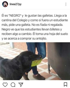 Funny Spanish Memes, Funny Relatable Memes, Funny Posts, Mexican Memes, Clean Memes, Best Memes, Cute Animals, Wattpad, Puppies