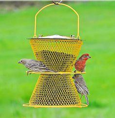 birds at NO/NO feeder