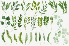 28 Watercolor Branches and Leaves - Illustrations - 3