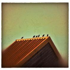 Aves descansando