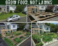 Backyard Ideas - Grow food. Much more beautiful in my opinion.