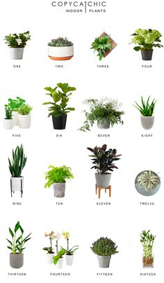 Home Trends | our favorite chic indoor plants and modern planters for the home | copycatchic luxe living for less budget home decor and design http://www.copycatchic.com/2017/03/home-trends-indoor-plants.html?utm_campaign=coschedule&utm_source=pinterest&utm_medium=Copy%20Cat%20Chic&utm_content=Home%20Trends%20%7C%20Indoor%20Plants