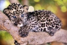 Community Post: 110 Baby Animals Looking Sad