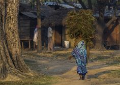 Bihar village morning, India, pictures of India