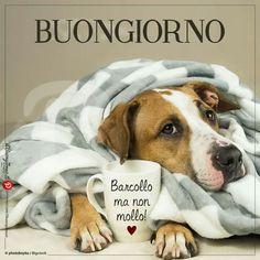Buongiorno Good Morning Gif, Good Morning Images, Good Morning Quotes, Italian Memes, Italian Quotes, Italian Phrases, Day For Night, Love Your Life, Good Mood