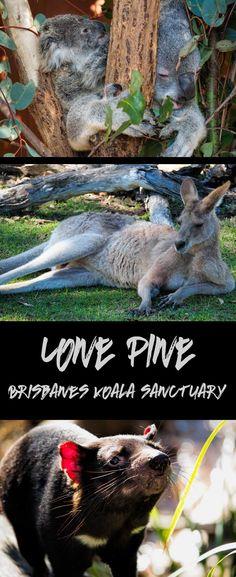 Lone Pine Koala Sanctuary is Brisbane's native wildlife park.  Cuddle a koala, take a selfie with a kangaroo and learn a whole lot about Australia's unique animals.