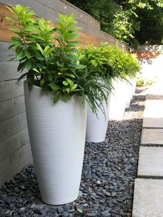 """Modesto 32"""" Tall Planter Tall Outdoor Planters, Backyard Planters, Backyard Patio Designs, Outdoor Gardens, Planters Around Pool, Outdoor Potted Plants, Planters For Front Porch, Pool Plants, Outdoor Landscaping"""