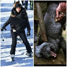Empty Cages Worldwide's photo: Kim Kardashian at what age did you lose your compassion?   http://www.ok.co.uk/celebrity-news/kim-kardashian-does-a-cruella-de-vil-we-arent-sure-shes-wearing-enough-fur