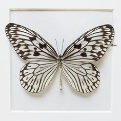 SALE: Idea idea // LARGE butterfly // shadowbox // mounted // gift for her // housewarming gift // black & white butterfly