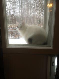 ikkunalla