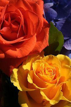 Tropicana & Gold Roses