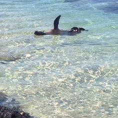 Mr seal saying hello #portfairy by greenvalefarm