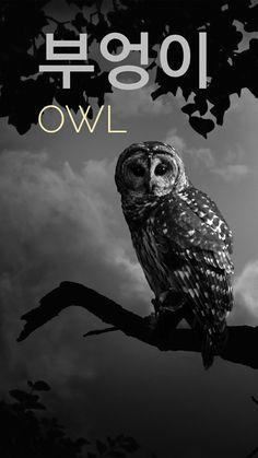 Owl in korean =부엉이
