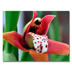 This ready to hang, gallery wrapped art piece features a photograph of a red orchid. Kurt Shaffer has been a self-taught photographer since age 13 (1970). He continues to learn the fine art of photogr