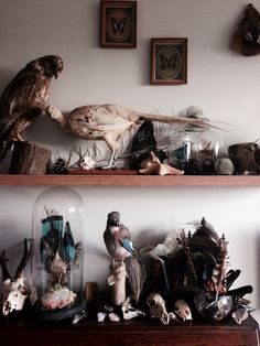 Curiosities and oddities // taxidermy // animal skulls Curiosity Cabinet, Taxidermy Decor, Cabinet Of Curiosities, Natural Curiosities, Culture Art, Goth Home, Deco Originale, Animal Bones, Bizarre