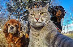 Estas son las 15 selfies más divertidas y virales de animales: No te las puedes perder | Virales