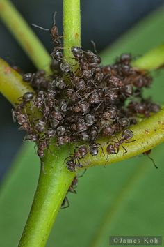 ˚Ant Cluster