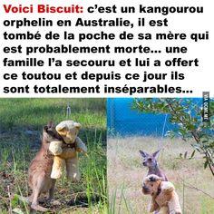 Bébé Kangourou Secouru