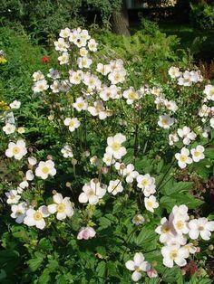 A 9 legmutatósabb évelő növény, amely minden kertet gyönyörűvé varázsol! - Ketkes.com Exotic Flowers, Gardening Tips, Flora, Home And Garden, Nature, Plants, Decor, Rose Trees, Decoration