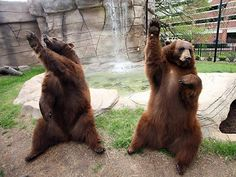 The Baylor Bears are cheering - How cute is that!!!